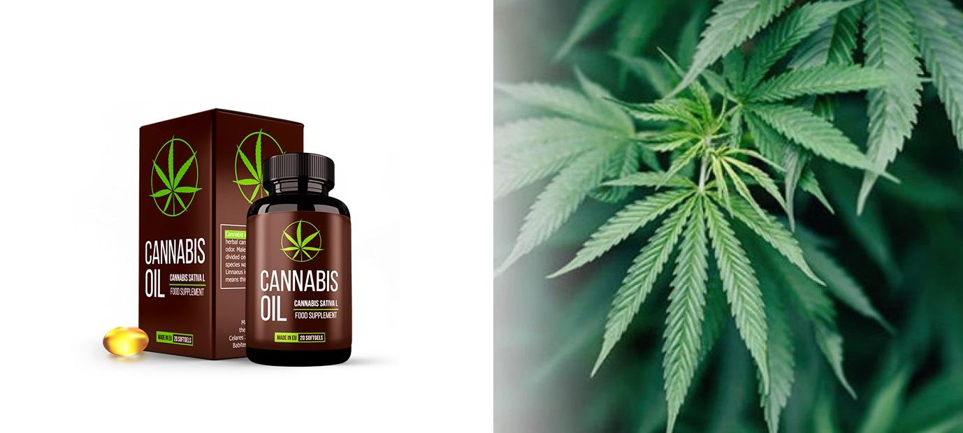 A tapasztalat, a vélemények arról, hogy Cannabis Oil